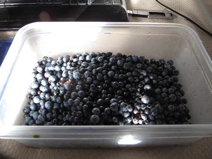 Just one of the containers of blueberries.